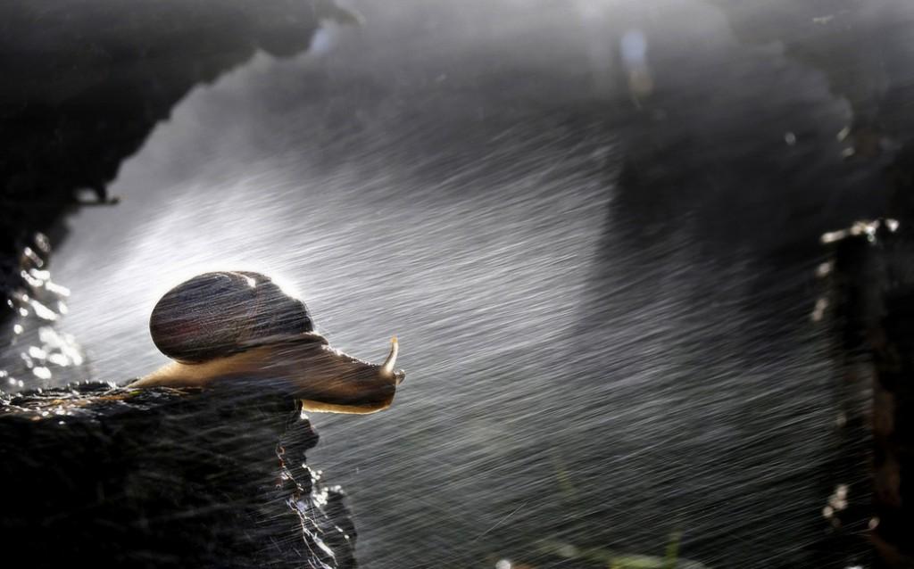 Улитка под дождем. Mario Boh.