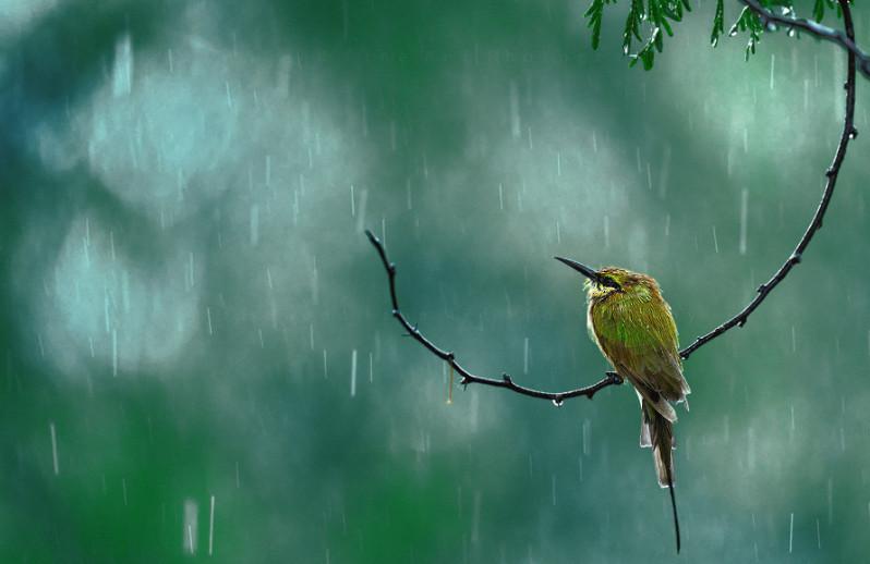 Природа во время дождя. Atif Saeed.
