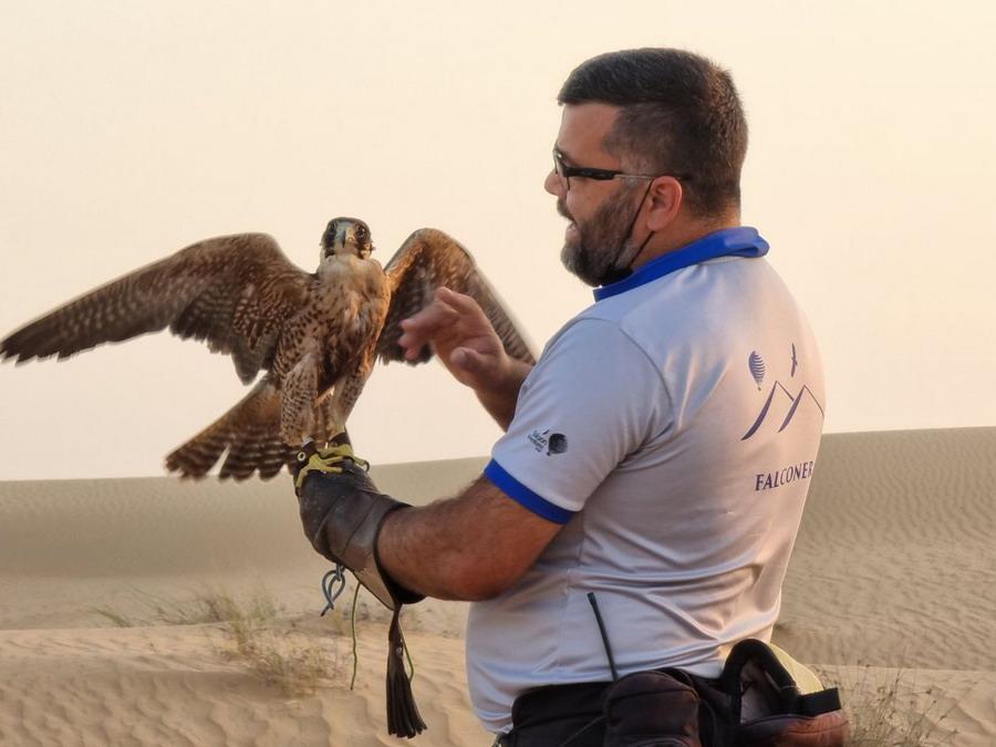 falcon show uae